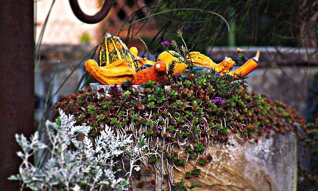 jardin d automne